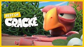 BARBWIRE   Cartoons for kids   CRACKE   Funny Slapstick Ostrich!