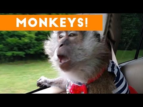 Cutest Monkey Videos of 2017 | Funny Pet Videos