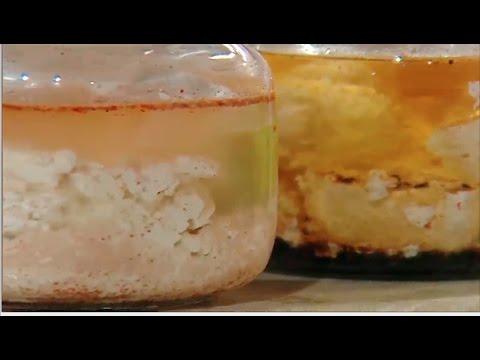 طرق مختلفه لحفظ الجبنه القريش  الشيف #هاله_فهمي من برنامج #البلدى_يوكل #فوود