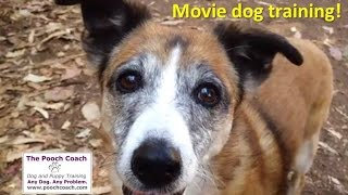 Training a dog for a movie