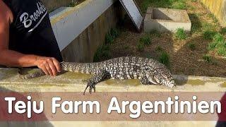 Reptil TV - Folge 101 - Teju Farm Argentinien