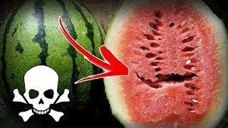 ÇOK TEHLİKELİ ; Eğer Karpuzun İçinde Bunu Görürseniz Sakın Yemeyin !!