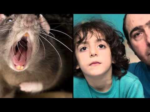 Top 5 de ataques de Ratas
