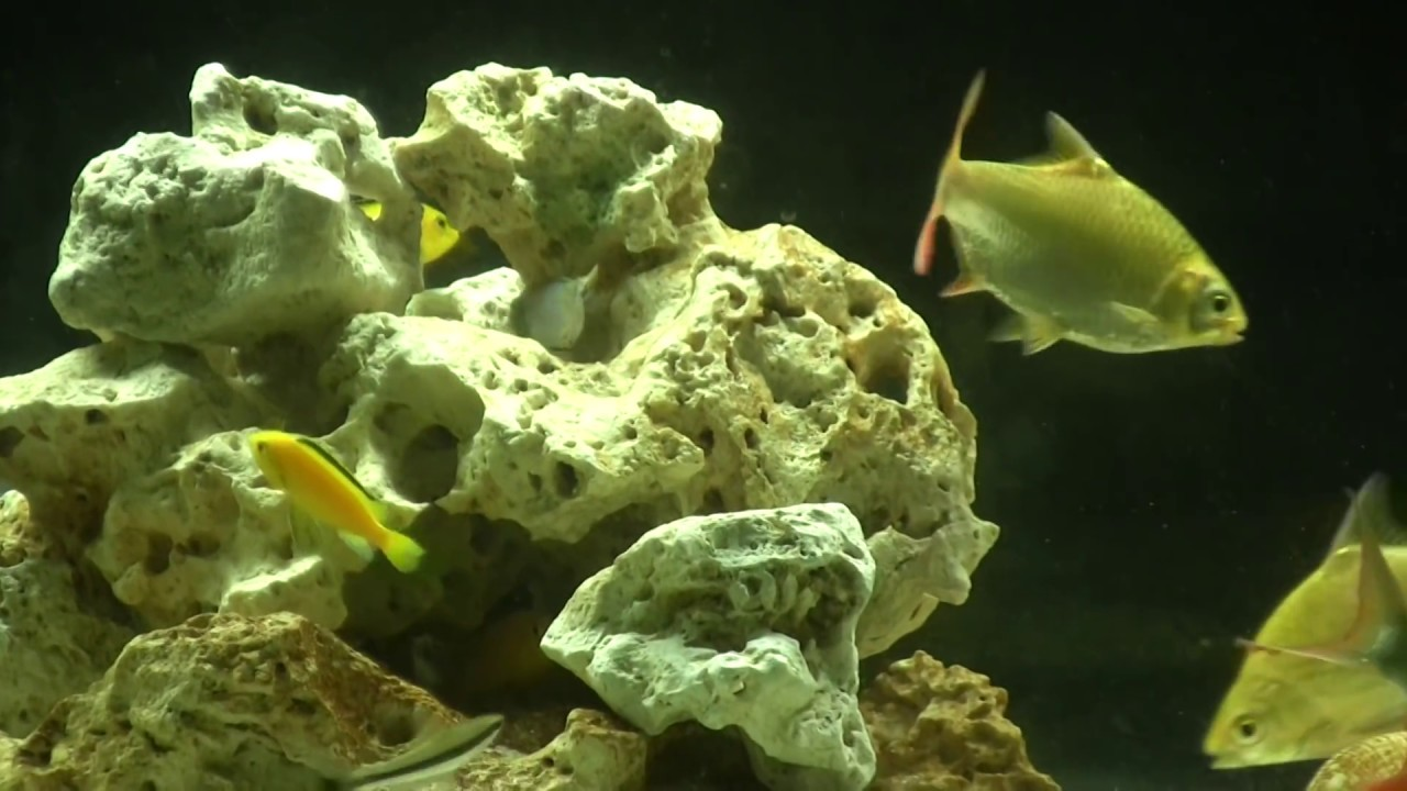 125 gallon tank youtube