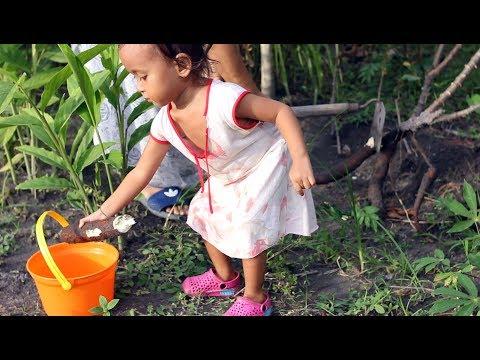 Kegiatan Seru Balita Lucu di Sore Hari Mencabut dan Membakar Singkong - cassava roast