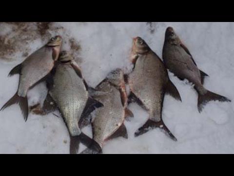 рыбалка в башкирии весной на леща