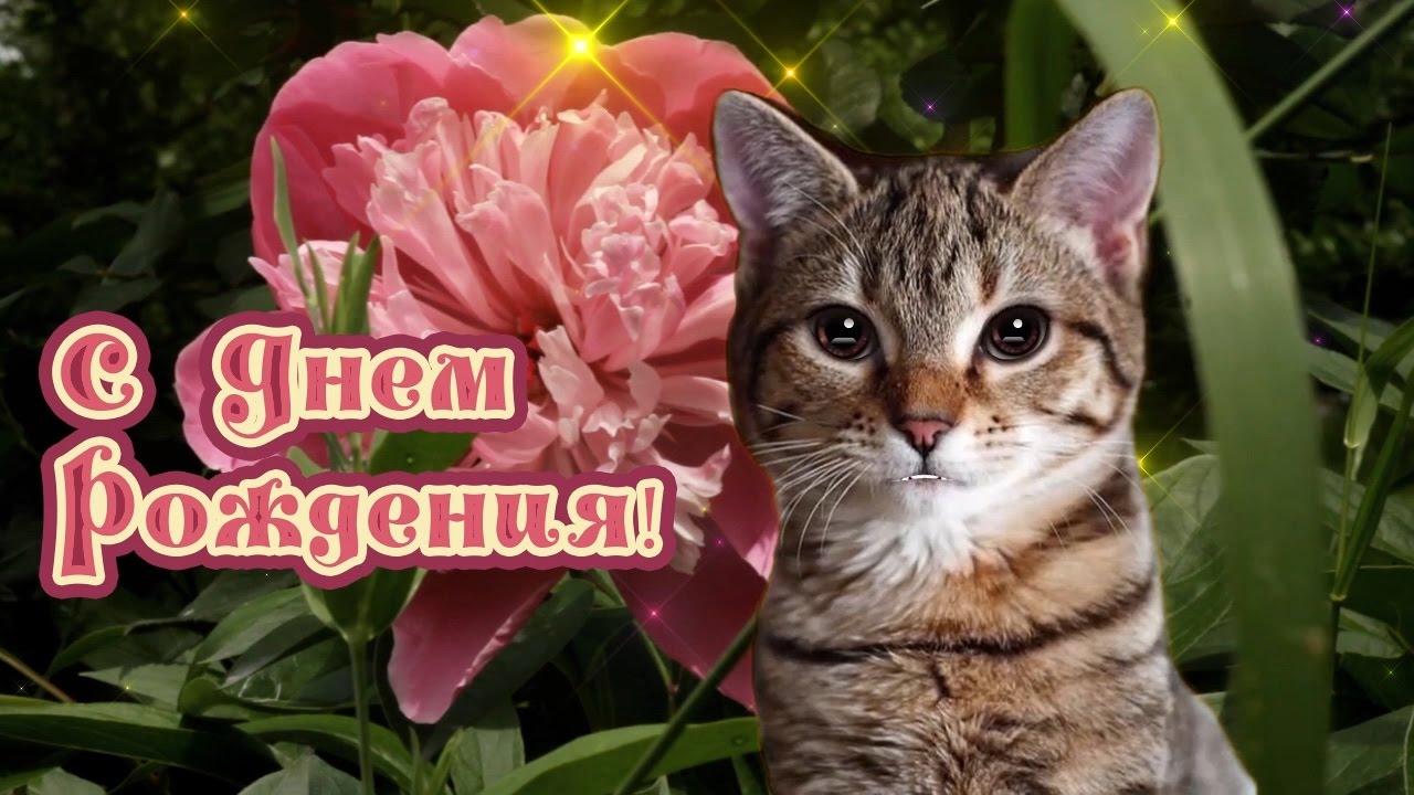 Поздравления с днем рождения с котиком 25