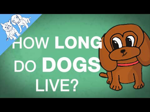 How Long Do DOGS Live? Explained