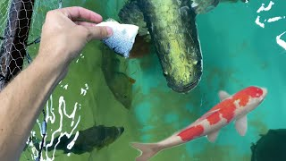 HAND FEEDING Aquarium Attacked For Food!!