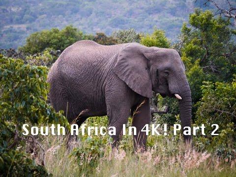 South Africa Safari in 4K! Part 2