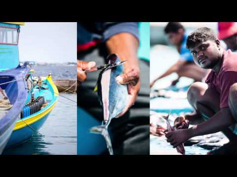 The Certified Sustainable Difference | Bumble Bee® Wild Selections® Tuna MSC and WWF collaboration