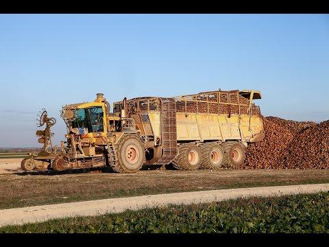 Arrachage betteraves JPS Soyez Mega Star DB75 - 12 rangs - sugar beet harvest 12 row