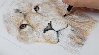 Speed Drawing - Leão / Lion