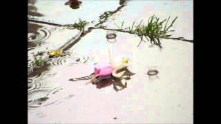 Watch Van Morrison Gypsy video