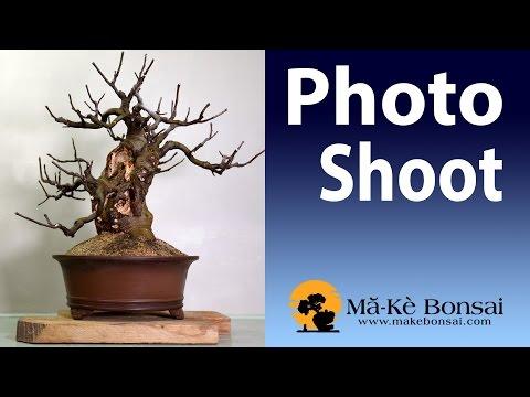 103) Bonsai Photo Shoot