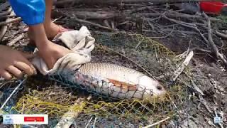 Câu cá trôi lên toàn hàng khủng - cá lôi cần may mà phóng theo kịp