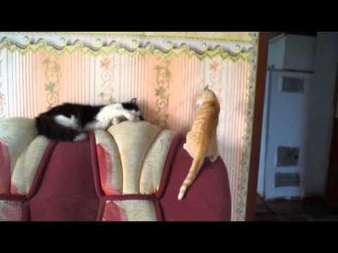 20130809165755 1) (1) Котёнок - рыжий нахал и кот. Юмор о животных.