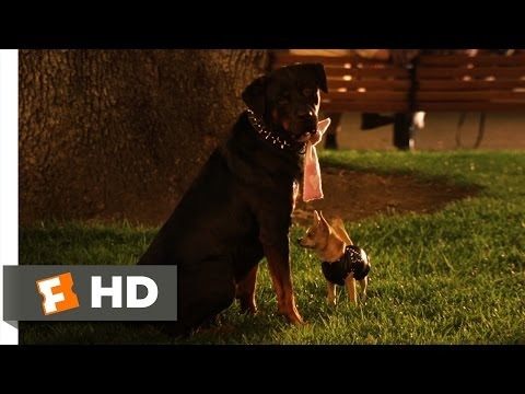 Legally Blonde 2 (8/11) Movie CLIP - Gay Dogs (2003) HD