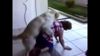 Fail Funny Animals Attack Crazy