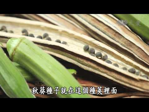 台灣-蔬果生活誌-20141122 五顏六色好食力