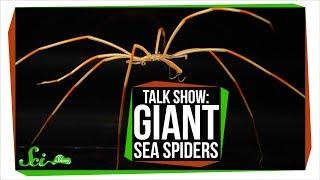 Giant Antarctic Sea Spiders | SciShow Talk Show