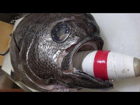 【武装色】全身鋼鉄の深海魚の口からとんでもない物が出てきた