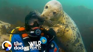 Diver's Been Playing With Wild Seals For 20 Years | The Dodo Wild Hearts