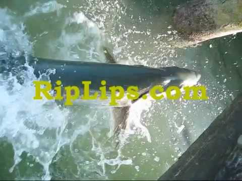 Tarpon Fly Fishing In The Lower Keys