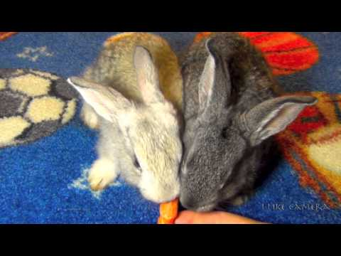 Cute Baby Rabbits Eating Carrots