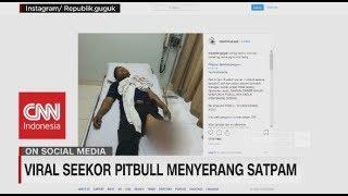 Viral! Seekor Pitbull Menyerang Satpam
