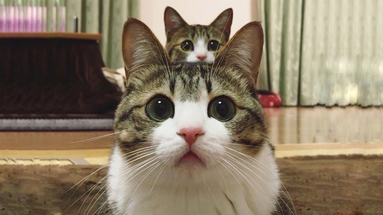 猫の画像 p1_21