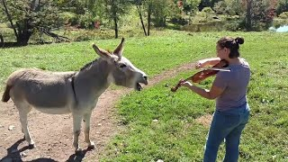 Funny videos 2018 Donkey edition | cute loving Donkey compilation