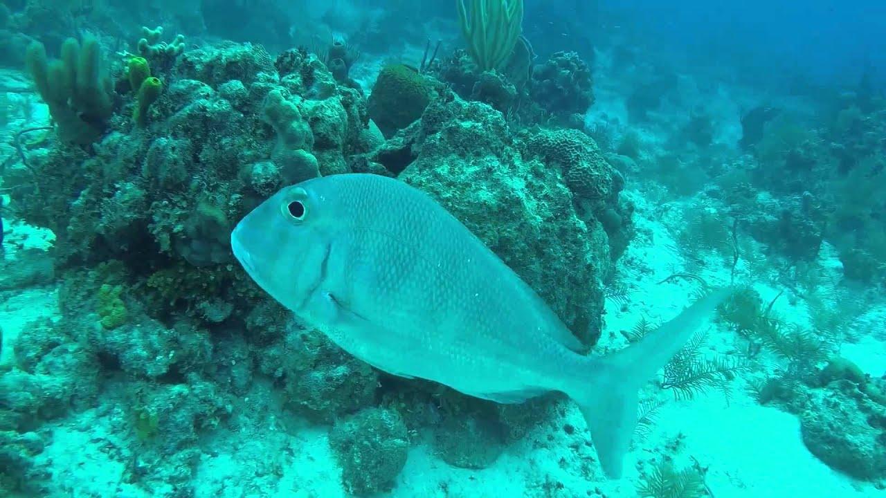 East Coast Divers aboard Juliet