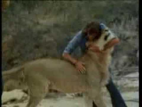 Christian the Lion Meets Old Owners Reunited
