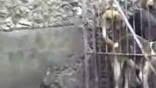 Thumb Como alimentar a 100 perros al mismo tiempo