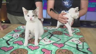 Attend the Oregon Humane Society's cat party