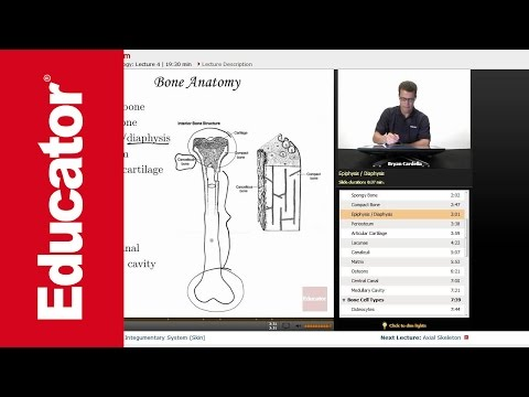 Anatomy crash course