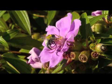 Erica Siegel - Great Carpenter Bee 2011