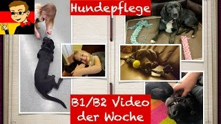Dog Care - Learn Intermediate German for B1/B2 #1 - Deutsch lernen