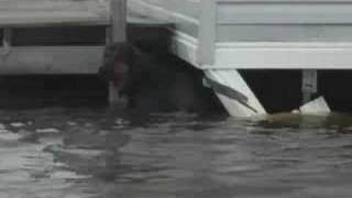 IFAW Hurricane Ike Response - Lousiana - 9.15.08 - Dog Rescue
