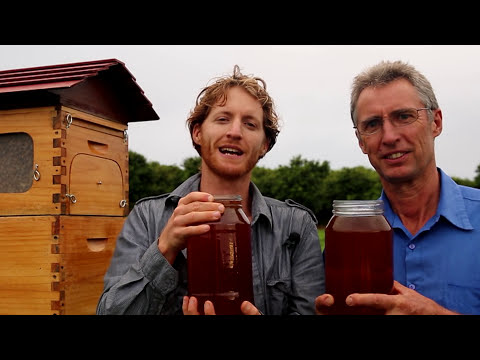 New Invention - Flow: Honey on Tap Directly From your Beehive