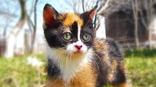 Смотреть кот куки