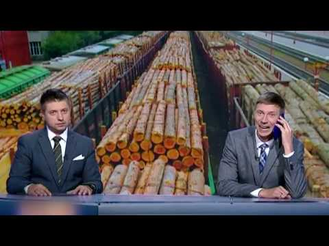 Українське дерево вирубають і продають в ЄС! Пожежники без роботи: нема лісу - нема пожеж!