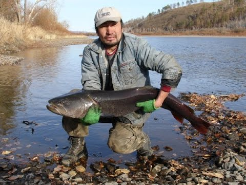 Рыбалка в монголии река онон гол music