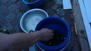 Засолка огурцов и помидор в бочках