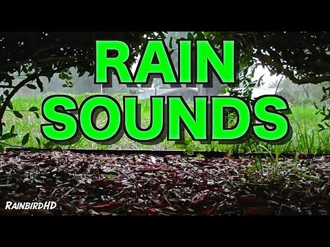 Rain and Thunder Sounds 8 Hours High Quality HD 1080p