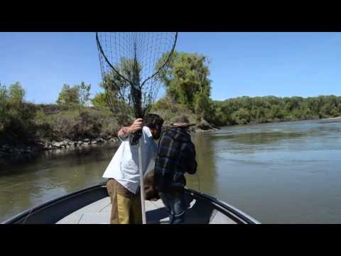 Sturgeon Fishing with Keven Brock