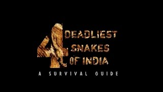 4 Deadliest Snakes of India   A Survival Guide