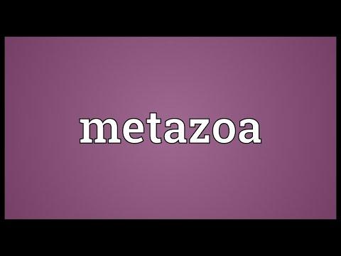 Header of Metazoa
