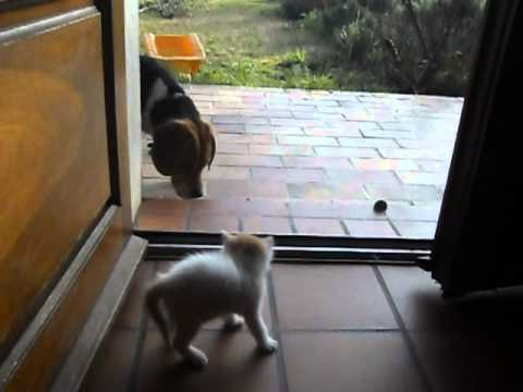 chaton et chien rigolos